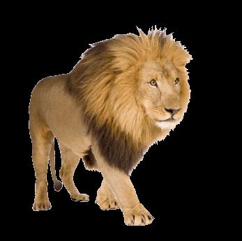 7-lion-png-image-image-download-picture-lions