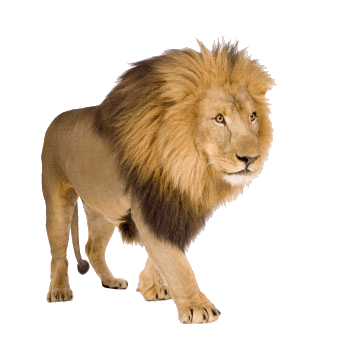 7-lion-png-image-image-download-picture-lions