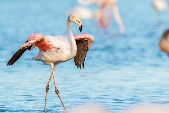 flamingo-2591522_960_720