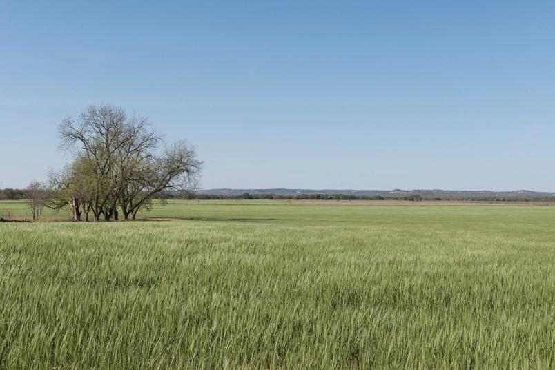 Field of high waving grass