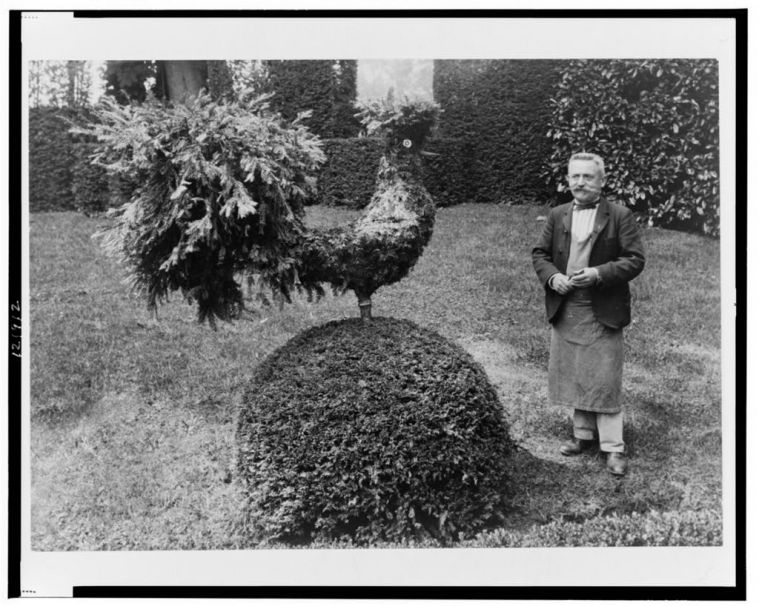 Gardener standing alongside shrub