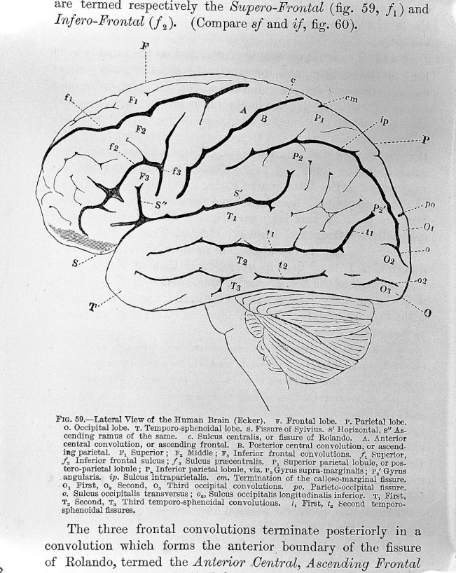 DavidFerrier_The_Functions_of_the_Brain