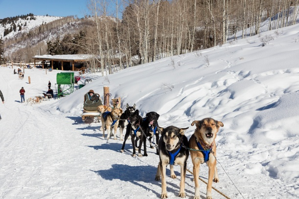 Dogsled_Highsmith