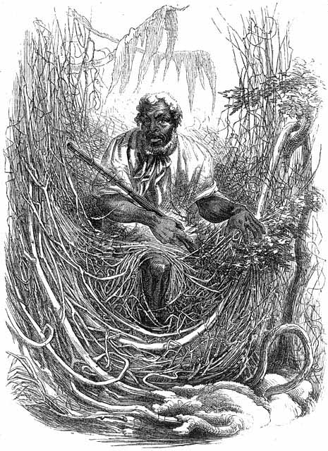 GreatDismalSwampMaroon1856