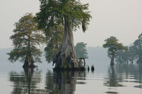 Photo_of_the_Week_-_Great_Dismal_Swamp_National_Wildlife_Refuge_(VA)_(4578425529)